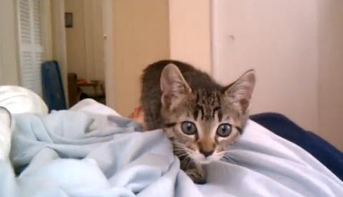 El ataque de un gato grabado a pocos centímetros