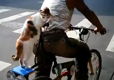 Un hombre lleva a su gato de paquete en la bicicleta