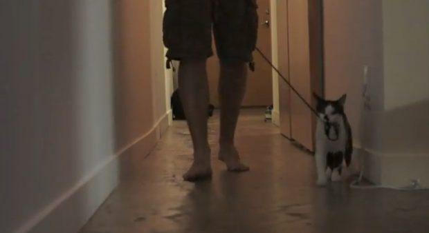 Sólo gatos: Cómo pasear a su mascota humana