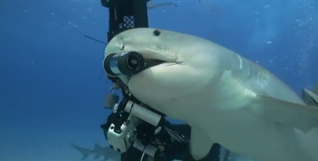 Un tiburón le roba a un buzo la cámara submarina