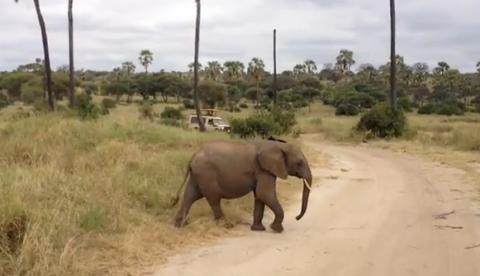 Familia de elefantes cruzando una carretera en un parque de Tanzania