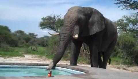 ¿Qué sucede si pones una piscina en la sabana africana?
