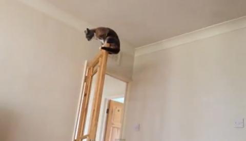 Este gato podría ir perfectamente a los Juegos Olímpicos