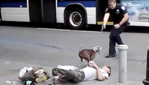Un pit bull sobrevive a los disparos realizados por dos policías en plena calle de Nueva York