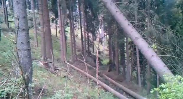 Quería talar sólo un árbol y se carga medio bosque