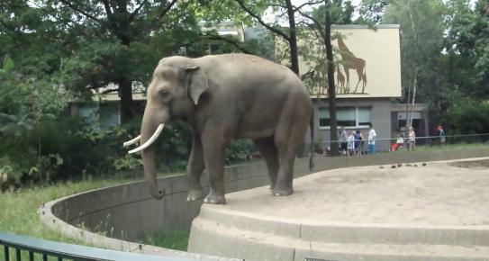 Un elefante le gasta una pequeña broma a un visitante