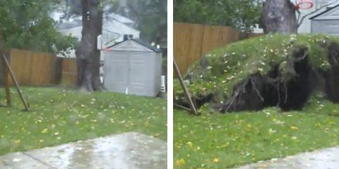 El huracán Sandy arranca el árbol del jardín de una casa