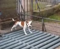 Así es como cruza un perro una rejilla para el ganado