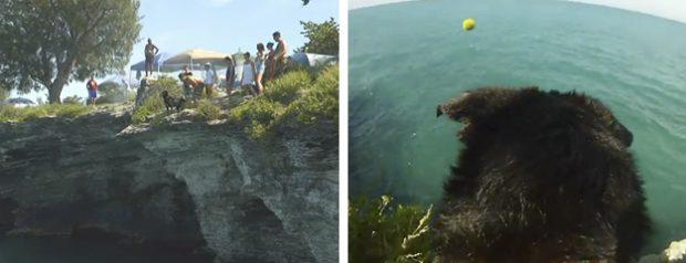 El perro que no le tiene miedo al agua ni a las alturas