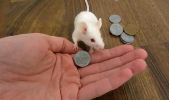 El ratón que gasta todo su dinero en una golosina