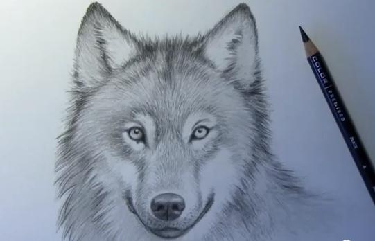 Mark Crilley: Así se dibuja un lobo