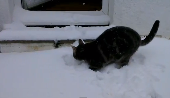 Un gato descubre la nieve