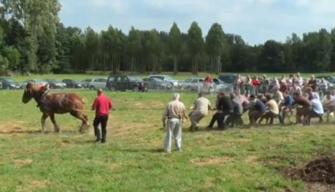 Prueba de fuerza: 18 hombres contra un caballo