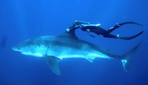 Una mujer que nada con tiburones desde los 14 años para demostrar que no son malos