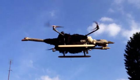 El creador del 'Orvillecopter' construye un helicóptero radiocontrol con el cuerpo de un avestruz