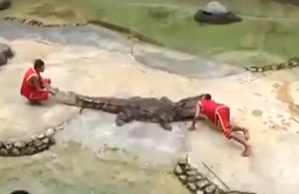 Un cocodrilo muerde la cabeza de su entrenador en Tailandia