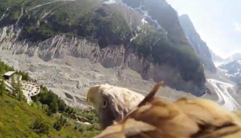 El vuelo de un águila grabado con una cámara GoPro atada al animal