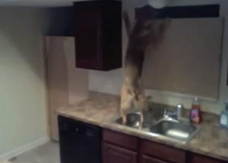 He tenido que poner una cámara en la cocina para ver como diablos se escapa mi perro