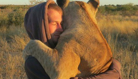 El amor de una leona hacia los hombres que la salvaron