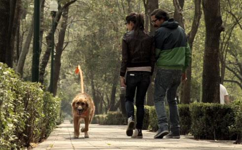 El dueño invisible: Ingeniosa y emotiva campaña para fomentar la adopción de perros abandonados