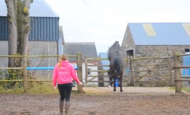 Un caballo intenta un salto imposible