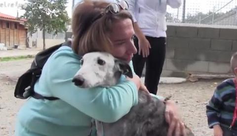 EJEMPLO: Una familia adopta a una galga de 8 años que fue abandonada, está coja y tiene leishmaniosis