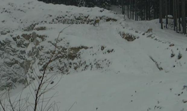Un ciervo escapa por muy poco de una explosión
