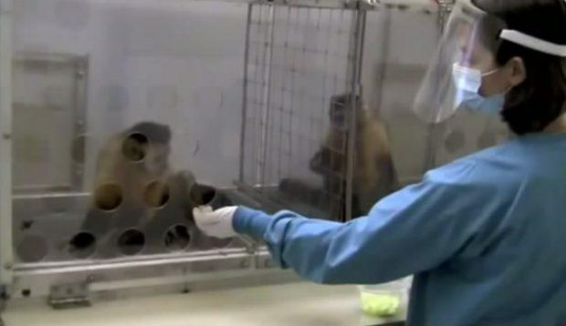 A dos monos se les paga desigualmente por la misma acción y atención a su reacción