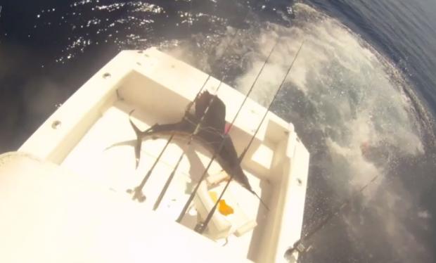Un pez vela salta dentro del barco y los pescadores saltan al agua