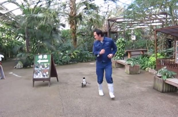 Parece como si el pingüino tuviese un imán con el hombre