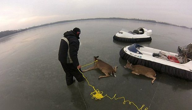 Un padre y un hijo rescatan con un hovercraft a unos ciervos atrapados en el hielo