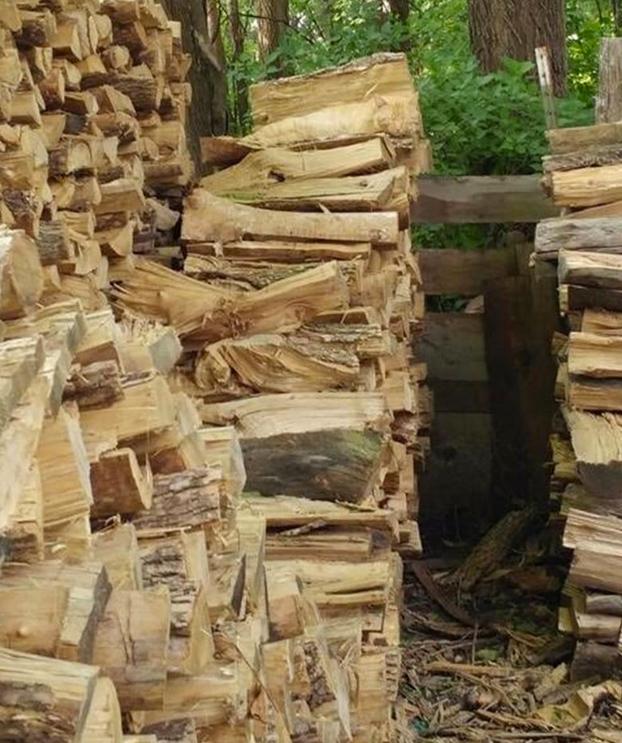 animal-oculto-foto-madera-2