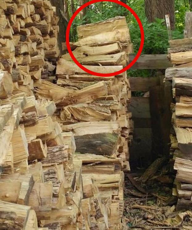 animal-oculto-foto-madera-solucion