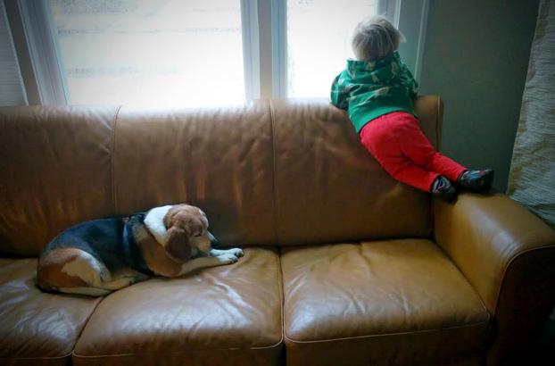 carta-nino-perro-fallecido-3