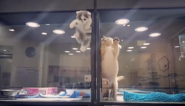 Épica fuga de un gatito para meterse en la jaula de su vecino, un cachorro de perro