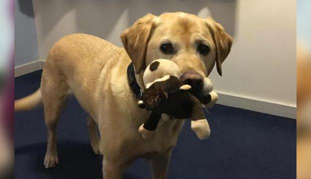 mujer-perro-uber-londres-2