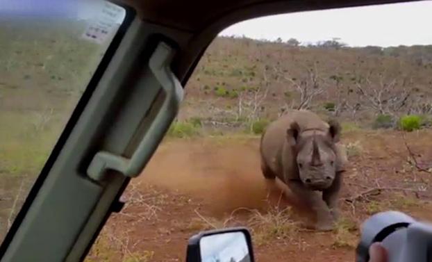 ''Os dije que no quiero fotos!'' Un rinoceronte embiste el coche de unos turistas