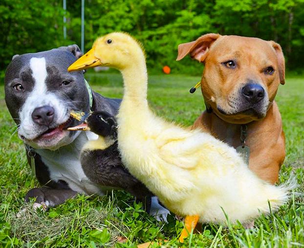7-animales-rescatados-11