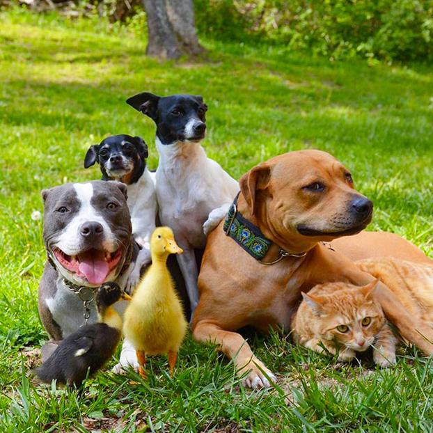 7-animales-rescatados-2