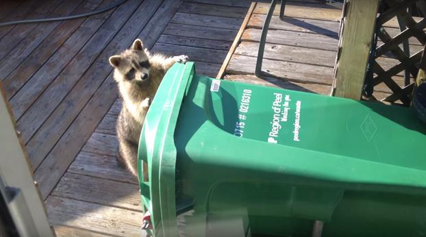 ¿Qué no puedo abrir el cubo de basura? Pues me lo llevo...