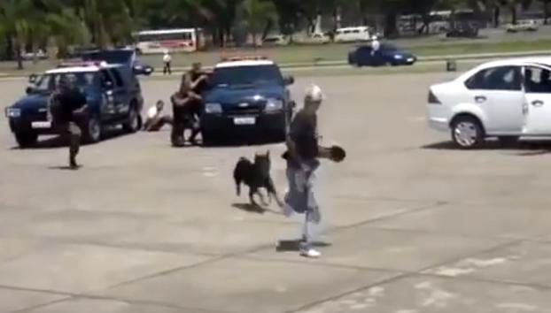 Un perro policía ataca a uno de los agentes durante una demostración