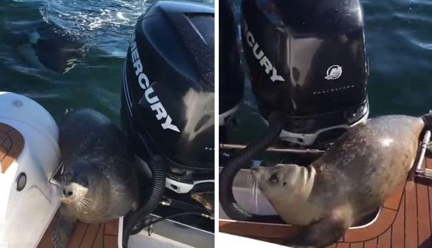 Cuando subir al barco de unos humanos es tu única opción para no ser devorado por las orcas