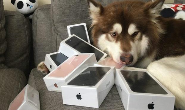 coco-perro-magnate-chino-8-iphone-7-2