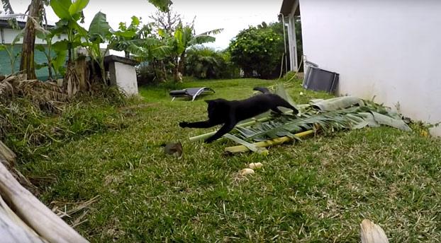 Atención a la técnica de este gato para cazar pájaros en el jardín