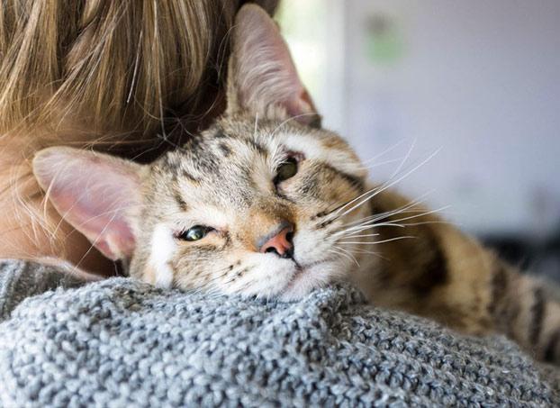 gatos-callejeros-sin-parpados-4