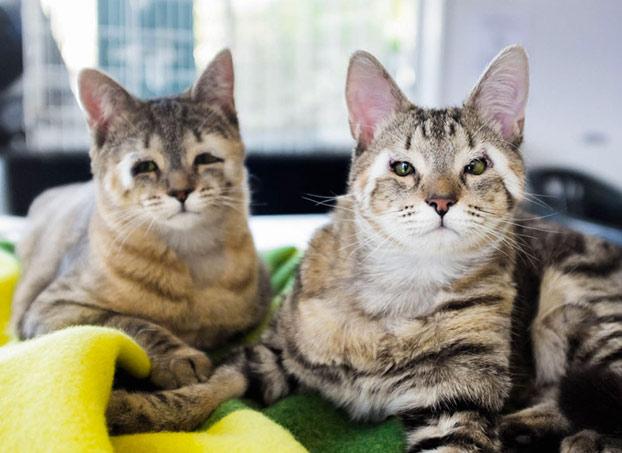 gatos-callejeros-sin-parpados-5