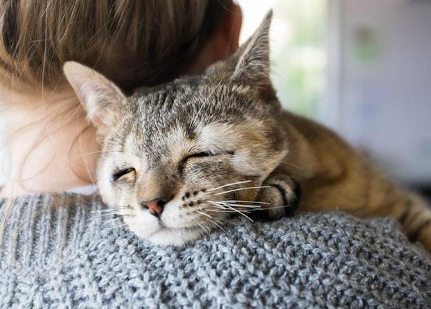 gatos-callejeros-sin-parpados-8