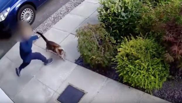 Un niño de 5 años pega y maltrata a la gata de su vecino y esta le paga con la misma moneda