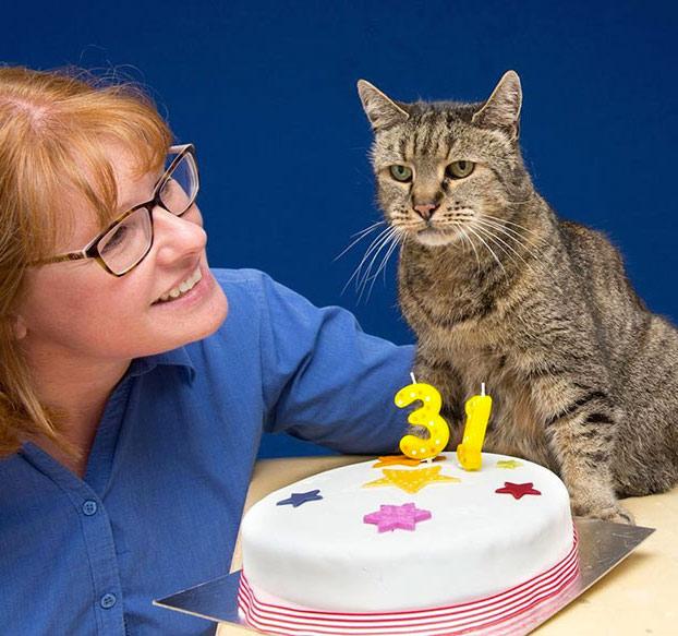 gato-31-anos-2