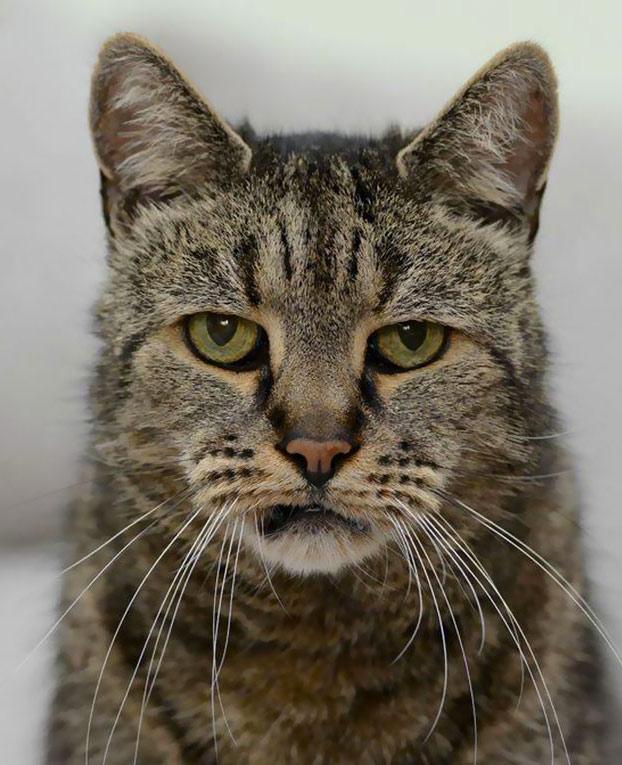 gato-31-anos-3